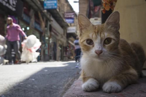 大きな目の美人な猫