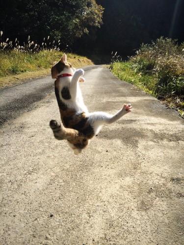 道路で大ジャンプする猫