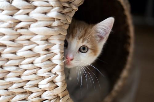 猫ちぐらの中に隠れている子猫