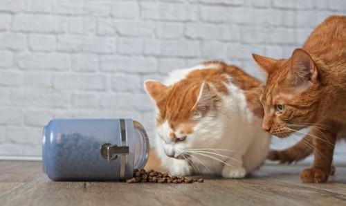 瓶からこぼれる餌を見る2匹の猫