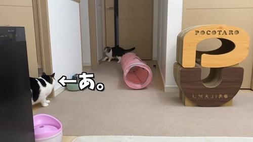 部屋の奥にいる猫と横から出てきた猫