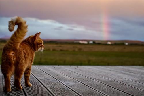 虹を見つめる猫
