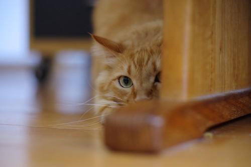 家具の陰で姿勢を低くする猫