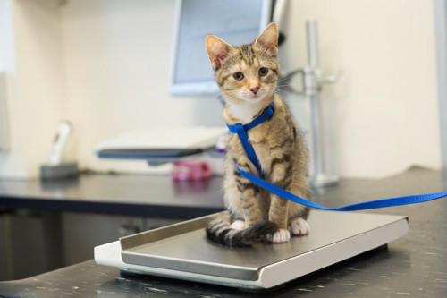 体重計の上に座っている猫