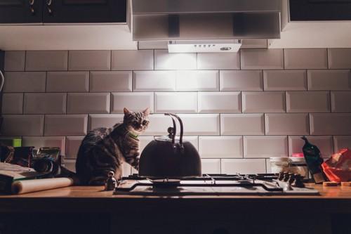 深夜の台所にいる猫