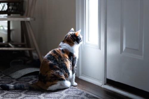 ドアの前に座って外を見る猫