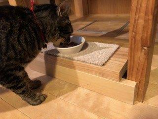 食事台を使う猫