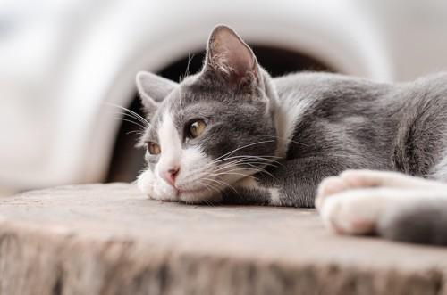 寂しげな表情の猫