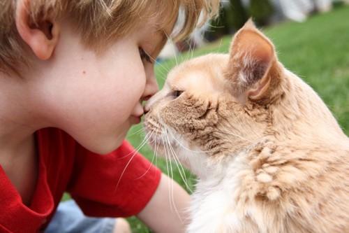 子どもと鼻キスする茶白