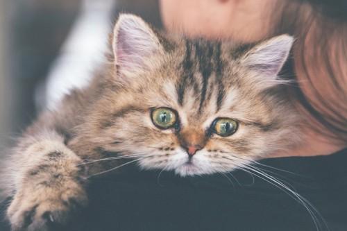 人の肩に頭を乗せる猫