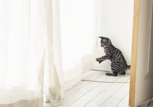 カーテンで遊びそうにしている猫