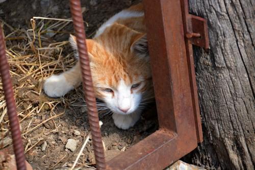 鉄格子の中の猫