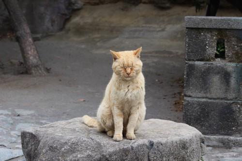 目を閉じて座る茶トラ猫