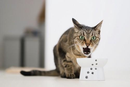 食べ物に文句を言う猫