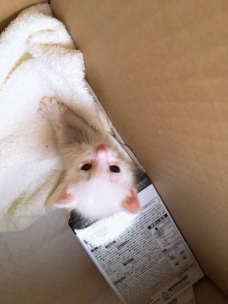 産まれたての白猫の子猫