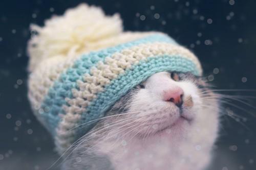 白とブルーの帽子を被った猫