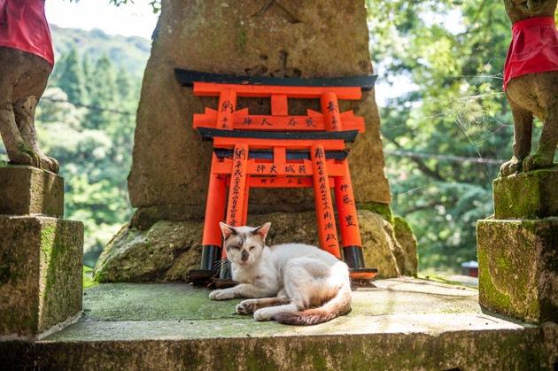猫がいる神社
