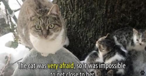木のそばに猫一家