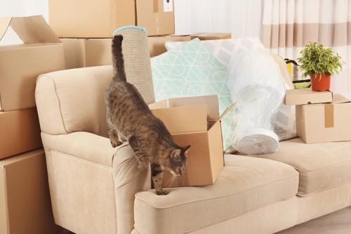 引っ越しの最中の部屋にいる猫