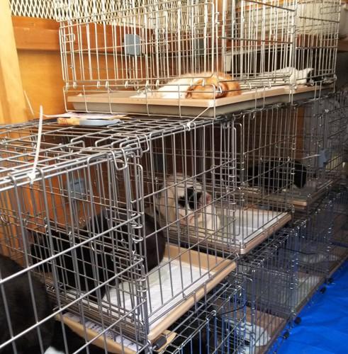 手術後の猫たち