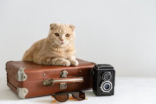 旅行鞄に乗っかる猫