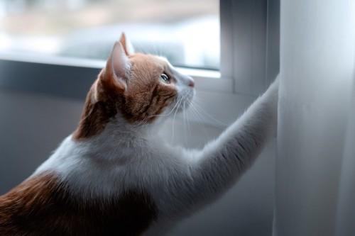 窓を開けようとする猫