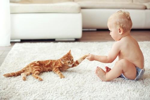 手をつなぐ赤ちゃんと猫