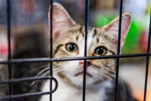ケージから見る猫