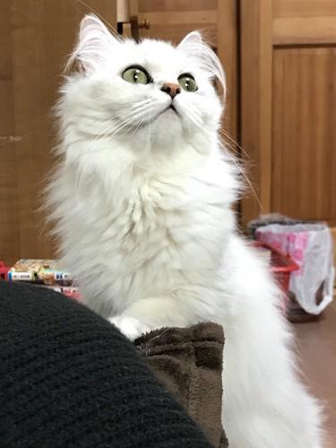 毛布を踏む猫