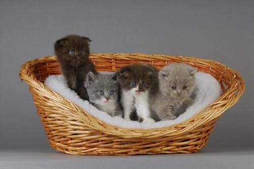 籠ベッドの中の4匹の子猫たち