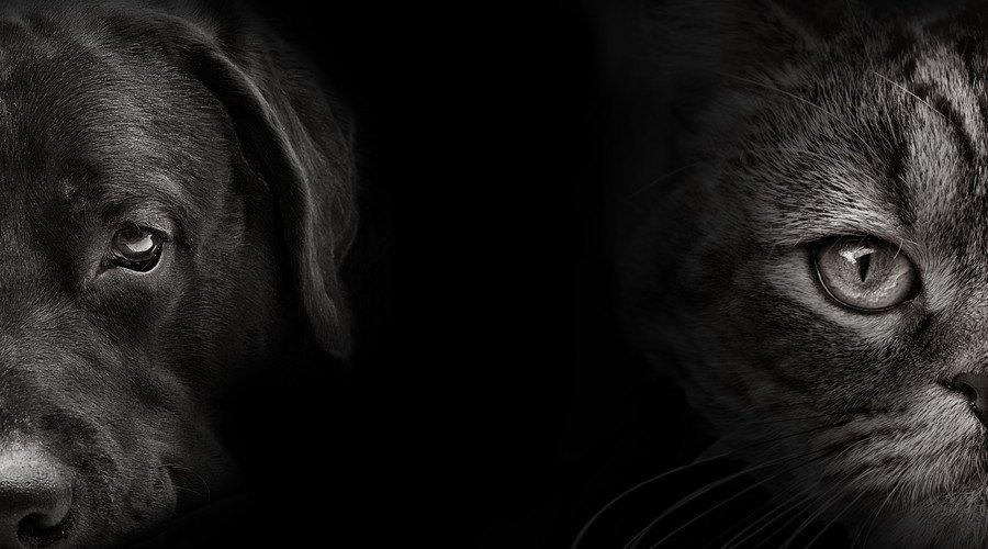 モノクロの犬と猫