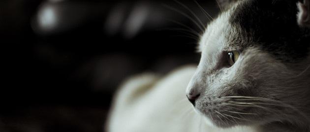 虐待されたかもしれない猫