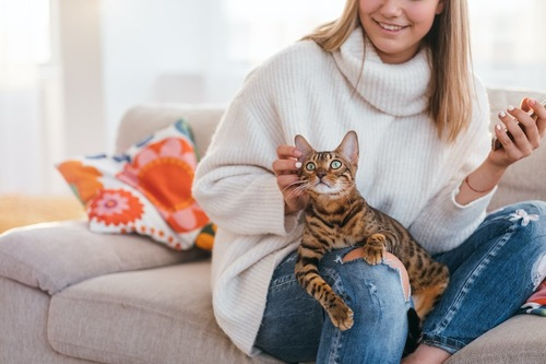 ソファーに座る飼い主の膝の上に乗っている猫