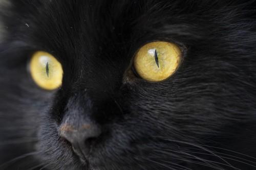 猫の瞳のアップ