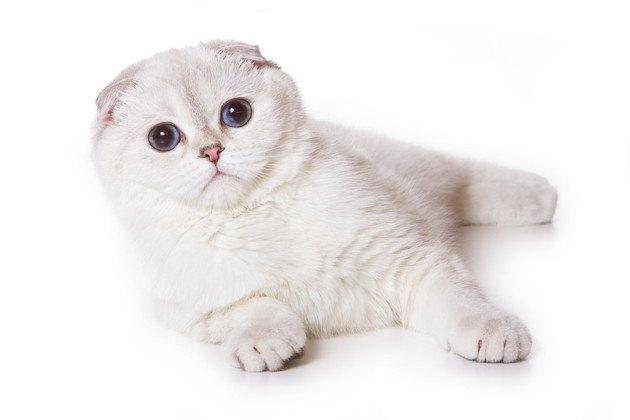 横山由依さんを見ていそうな猫
