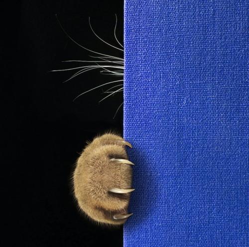 青い本に引っ掛けられた猫の爪とちらりと見える髭