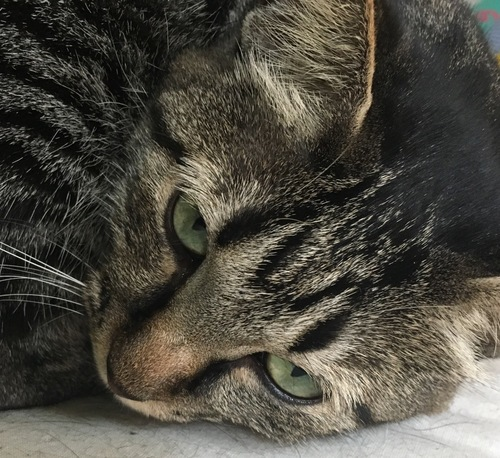 猫相が悪い猫