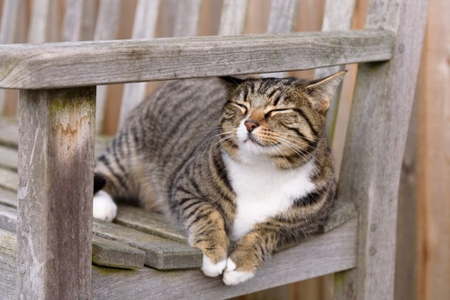 ベンチで寝る猫