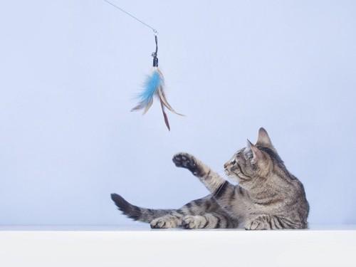 釣り型のおもちゃで遊ぶ猫