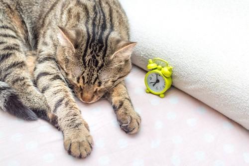 目覚まし時計の横の猫
