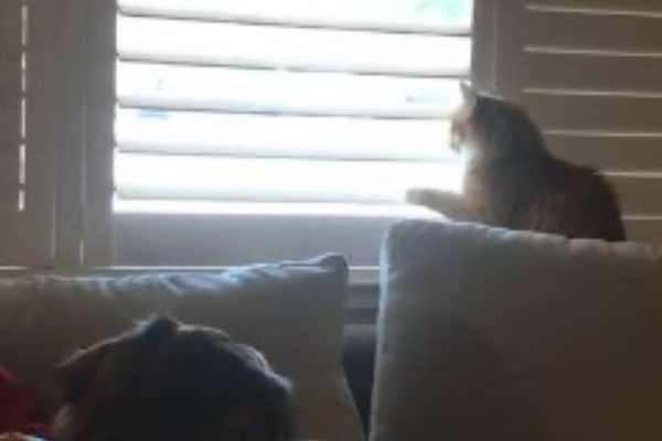 速攻で開ける猫