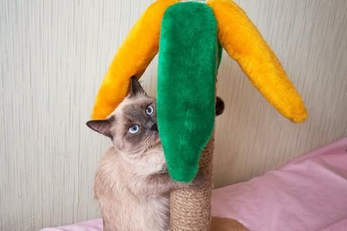 カラフルな爪とぎで爪を研ぐ猫