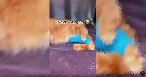 足に包帯を巻かれた猫