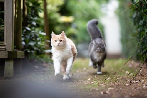 外を二匹で走る猫