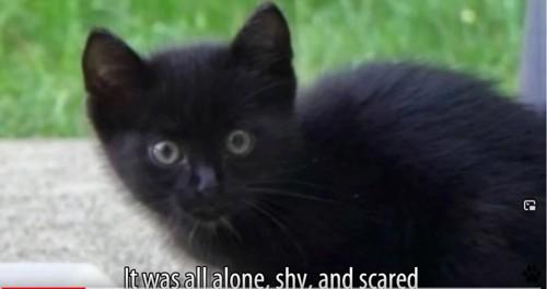 小さな黒猫