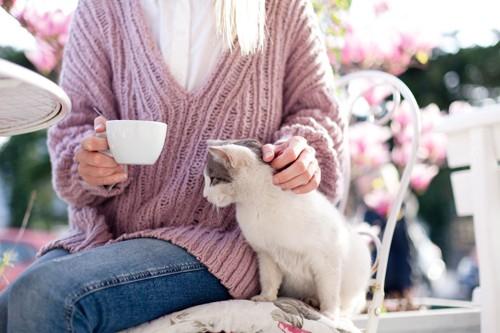 カップを持つ女性と甘える猫