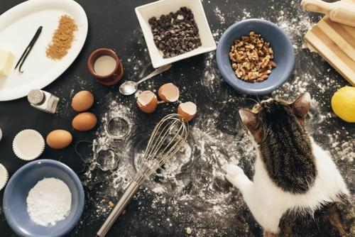 散らかった台所の上にいる猫
