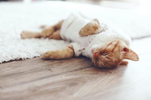 セーターを着て眠っている猫