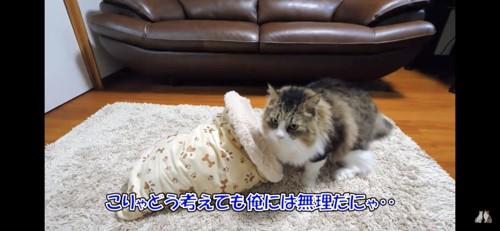 クッションに入るのを諦める猫