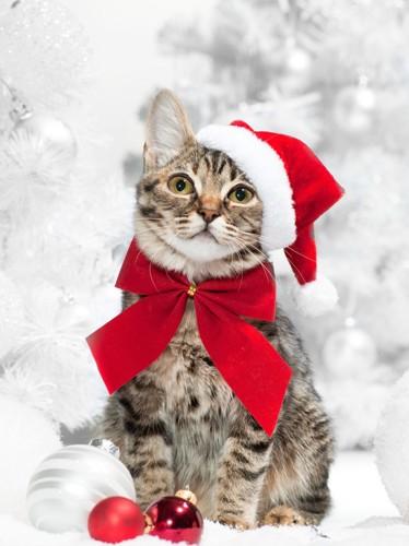 赤いリボンをした猫